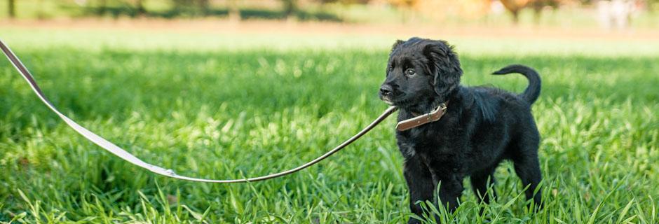beteenderådgivning hundcoach i vast